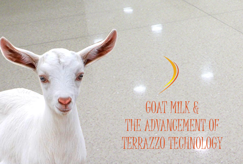 Goat Milk and the Advancements of Terrazzo Technology