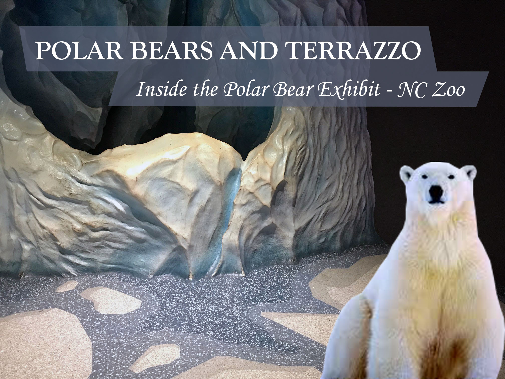 Polar Bears and Terrazzo Inside the Polar Bear Exhibit at the North Carolina Zoo